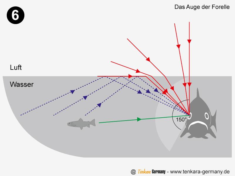 Was die Forelle sieht - Strahlengänge in und über dem Wasser